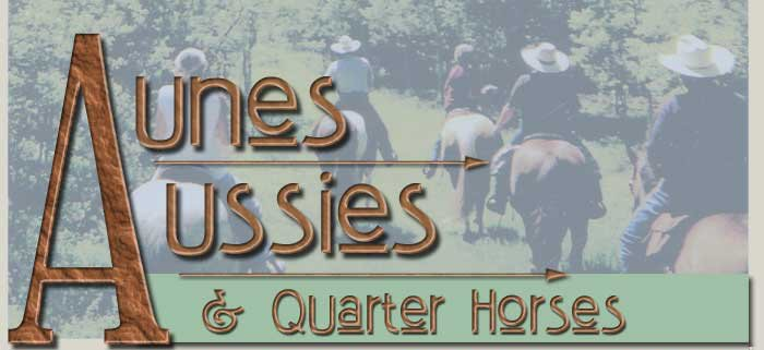 Australian Shepherds and Quarter Horses  bred and for sale by Aune's Aussies
