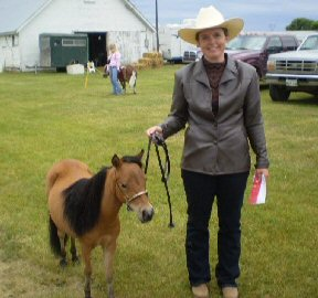 Fields of Blessing - Miniature Horses